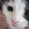 """Als Yvonne Maier im März 2013 den Verein """"Katzenhilfe Isselburg e.V."""" gründete, stand für die Isselburgerin fest, dass sie verwaisten […]"""