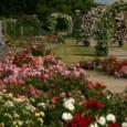 Die kfd Anholt und die Isselburger Landfrauen wollen gemeinsam auf Tour gehen. Das gemeinsame Ziel ist am 8. August das Rosenfestival in Lottum (NL). Wie […]