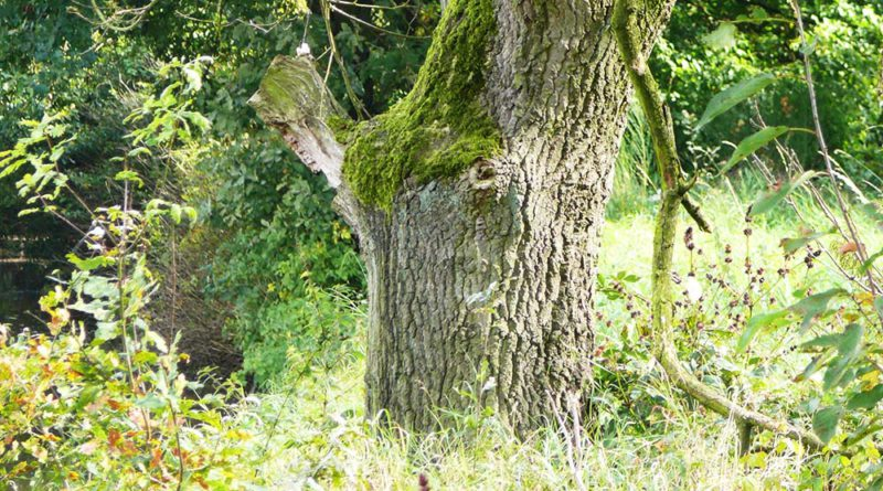 """""""Tag des Waldes"""" in der Anholter Schweiz"""
