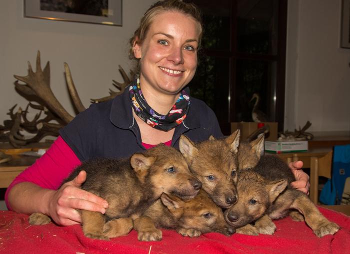 Fünf Wolfskinder gleichzeitig ist für Tierärztin Anne Brömmling sicher auch nicht alltäglich