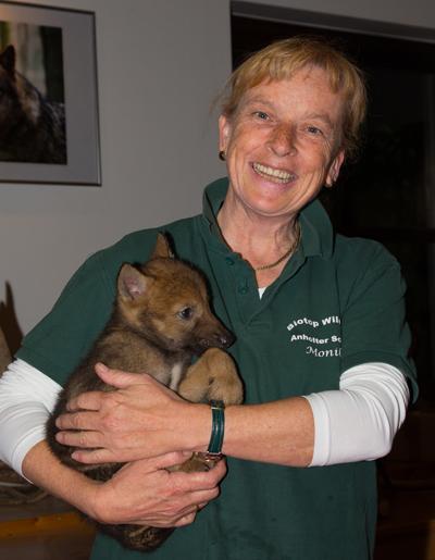 Das Wolfskind fühlt sich bei Monika Westerhoff-Boland schon gut behütet