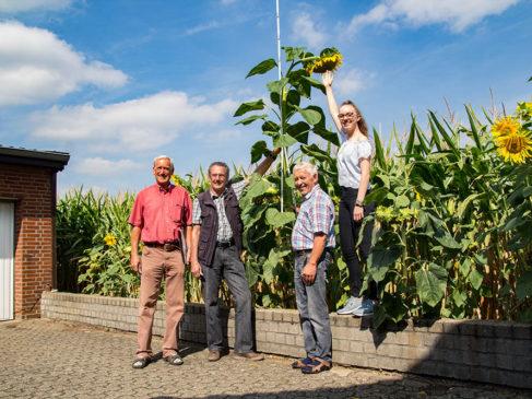 Sonnenblumenwettbewerb des Werther Heimatvereins