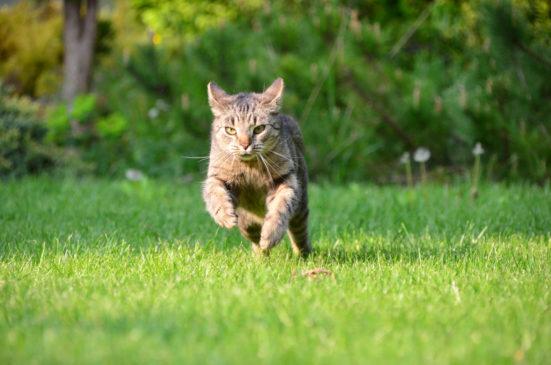 Katzenschutzverordnung tritt 2019 in Kraft