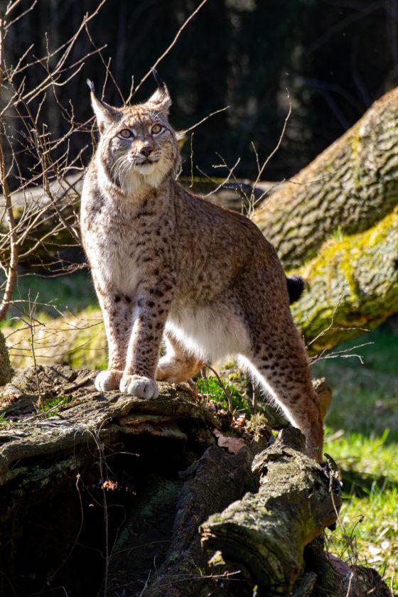 Ab dem 1. Mai ist der Wildpark Anholter Schweiz wieder geöffnet